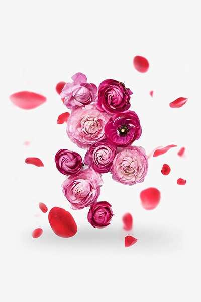 Декоративное растение Роза плетистая