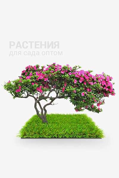 Растения для сада оптом